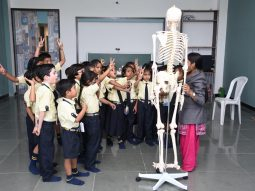 studying and learning body organs vijaya convent cbse school amravati