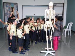 studying and learning body organs vijaya convent cbse school amravati